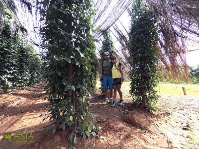 Kampot Pepper Farm by Asia Adventures